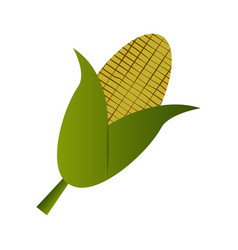 Isolated corn icon vector
