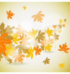maple autumn background vector image vector image