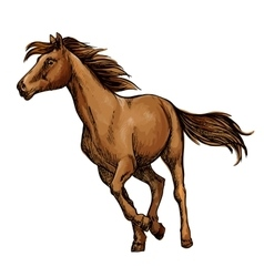 Running horse sketch with brown racehorse vector