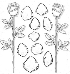 Isolated rose and petals handmade in sketch style vector