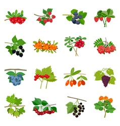 Colorful berries icons set vector