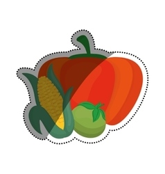 Fresh pumpking corn and tomato vegetable vector