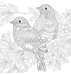 Sparrow birds vector image
