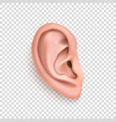 Realistic human ear icon closeup isolated vector
