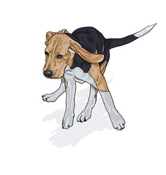 Drawing of running beagle with shadow on white vector