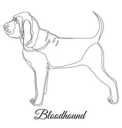 Bloodhound dog outline vector