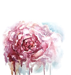 Watercolor peony background vector