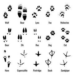 wildlife animals reptiles and birds footprint vector image vector image
