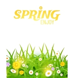 Bright Grass and Flowers vector image