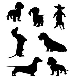 dachshund-2 vector image vector image