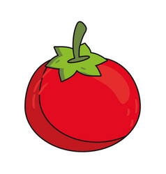 Tomato vegetable food fresh vector