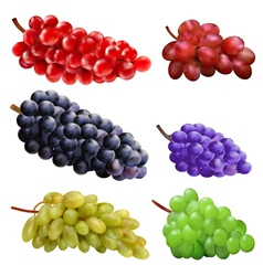 set of grapes vector image