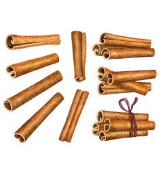 Cinnamon sticks isolated on white background top vector