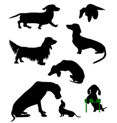 dachshund-3 vector image vector image