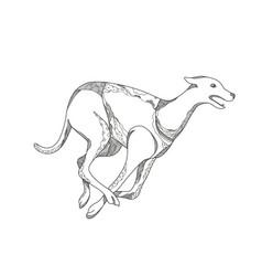 Grey-hound-running-side-doodle vector
