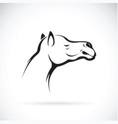 Camel head on white background wild animals vector
