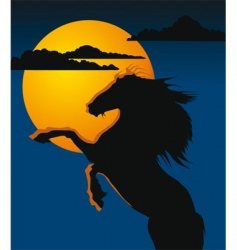 night horse vector image