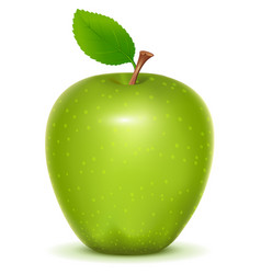 Green apple granny smith on white background vector