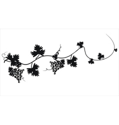 Black silhouette of grapes on the vine vector