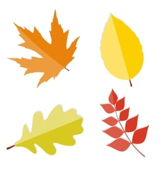 Shiny Autumn Natural Leaves vector image vector image