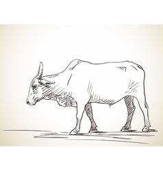 Zebu cow vector