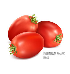 italian plum tomatoes roma vector image
