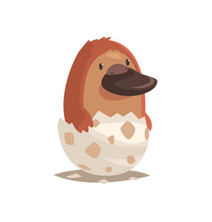 Cute newborn platypus in broken egg shell vector
