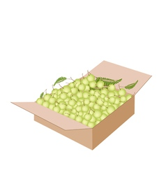Indian gooseberry fruits in a shipping box vector