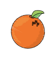 Orange fruit harvest fresh vector