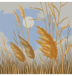 Yellow reeds in nature in autumn vector image