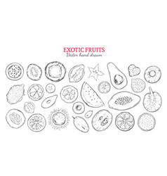 Exotic fruits and tropical berries set vector