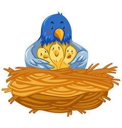 Mother bird and babies birds in nest vector