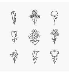 Flowers line icons vector