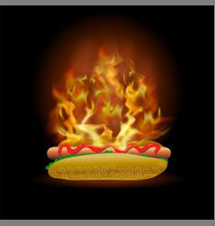 burning fresh hot dog with ketchup vector image vector image