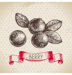 Cranberry hand drawn sketch berry vintage vector
