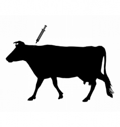 cow gets injection vector image vector image