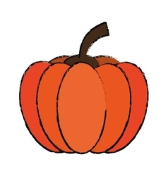 Drawing pumpkin harvest bittersweet vegetable icon vector