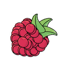 Raspberry fruit harvest fresh vector