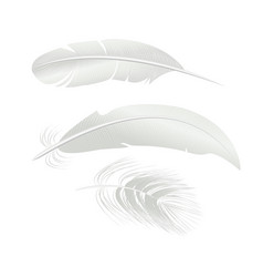 realistic detailed 3d white bird feathers set vector image vector image