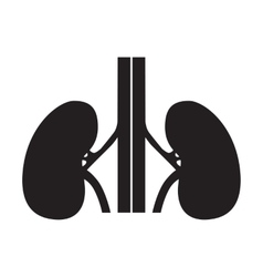 Human kidneys symbol vector