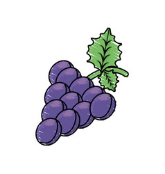 Grape fruit harvest fresh vector