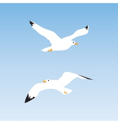 Seagull in the sky vector image