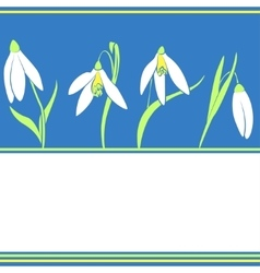 Pattern with snowdrop flowers spring background vector