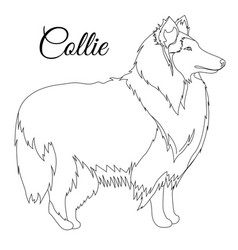 collie dog outline vector image vector image