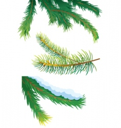 fir tree branches vector image vector image