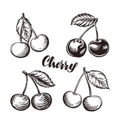 Cherry sketch fruits vector