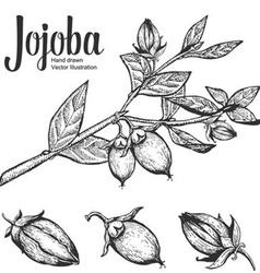 Jojoba Plant vector image