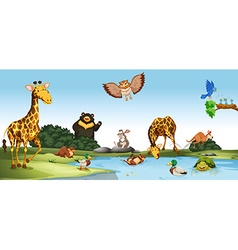 Wild animals living by the pond vector image vector image