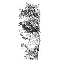 Eagle in tree vintage vector