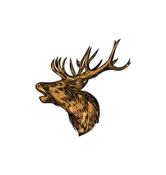 Red deer stag head roaring drawing vector